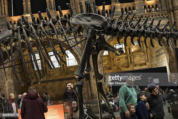 Members of the public walk around 'Dippy' the Diplodocus at Natural History Museum on January 4 2017 in London England The 70ft long plastercast...