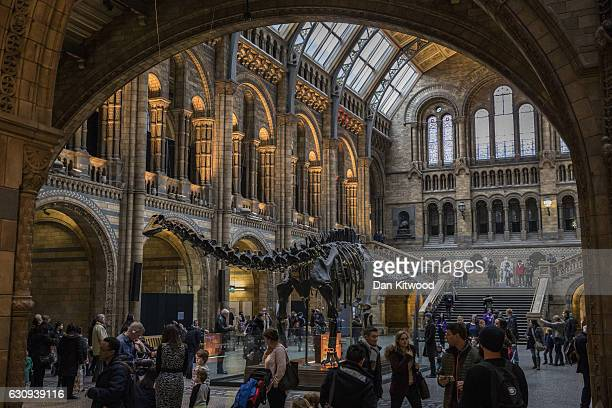 Members of the public walk walk around 'Dippy' the Diplodocus at Natural History Museum on January 4 2017 in London England The 70ft long plastercast...