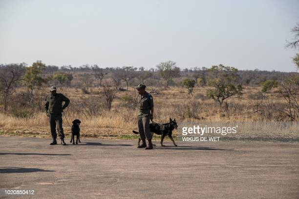 Members of the South African National Parks Service's K9 unit and their dogs stand at a roadblock in the Kruger National Park on August 21, 2018.