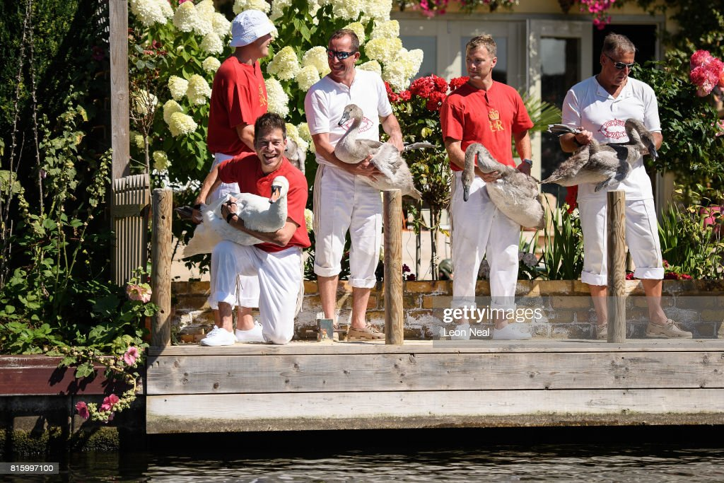 Members of the swan upping team prepare to release an adult swan and it's cygnets onto the river bank during the annual Swan Upping census on July 17, 2017 on the River Thames, South West London. The historic Swan Upping ceremony dates back to the 12th century, to when the Crown claimed ownership of all Mute Swans and they were eaten at banquets and feasts. The Sovereign's Swan Marker, David Barber, counts the number of young cygnets on the river each year and ensures that the swan population is maintained. The swans and young cygnets are also assessed for any signs of injury or disease.
