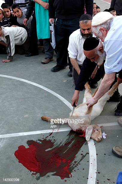 Members of the Temple Institute perform a Jewish ritual the slaughtering of a oneyearold flawless lamb in an enactment of the in preparation for the...