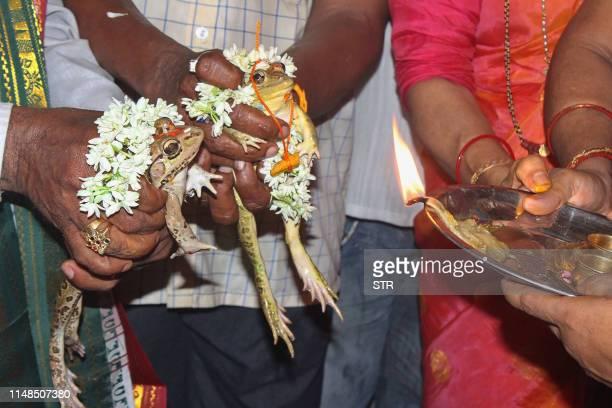 "Members of the Udupi Zilla Nagarika Samithi, conduct a ""manduka kalyanotsava"" or wedding of frogs, an age old belief of marrying a male and a female..."