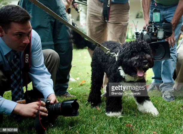Members of the White House press corps surround the Obama family dog Bo in the Rose Garden of the White House during US President Barack Obama's...