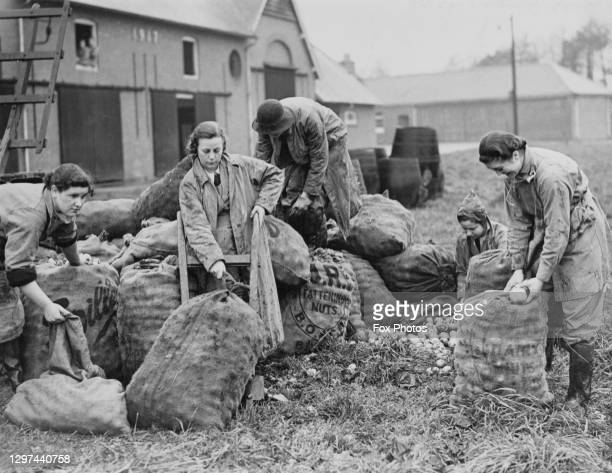 Members of the Women's Land Army sort and pack apples into sacks for cider making on 21st November 1939 at the Monmouthshire Institute of Agriculture...