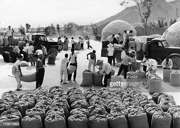 Members of the yangtan brigade of the yangtan people's commune in chungo county in the northern chinese province of shansi, loading wheat they have...