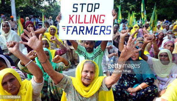 Members of various farmer organizations protest against the central government over agriculture related ordinances, in front of PSPCL Head Office, on...