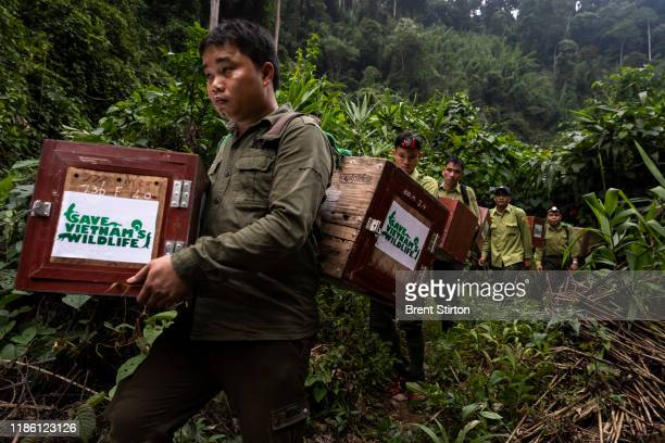 Members of Vietnam's first Antipoaching team and NGO Saving Vietnam's Wildlife walk upriver and release 25 rescued pangolins into this remote...