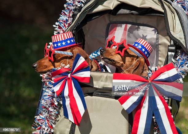 memorial day celebrations - memorial day dog stock pictures, royalty-free photos & images