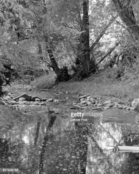 Memories Are Made Of This Autumn leaves looking like golden snowflakes float on the water of Boulder creek helping create a sylvan setting north of...