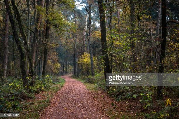 memories of autumn - william mevissen imagens e fotografias de stock