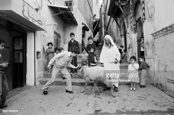 Men and boys and a sheep in the Casbah of Algiers