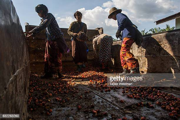 Men and women work in Asia World's palm oil mill on November 11 2016 in Bank Mae Village Myanmar Jobs in the mill are very hard work but also offer...