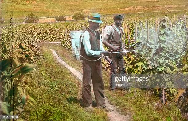 Men are manuring the grapevines Lower Austria Handcolored lantern slide Around 1915