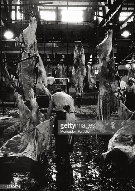 Men at work inside 'Swift' abattoirs in La Plata La Plata November 1957