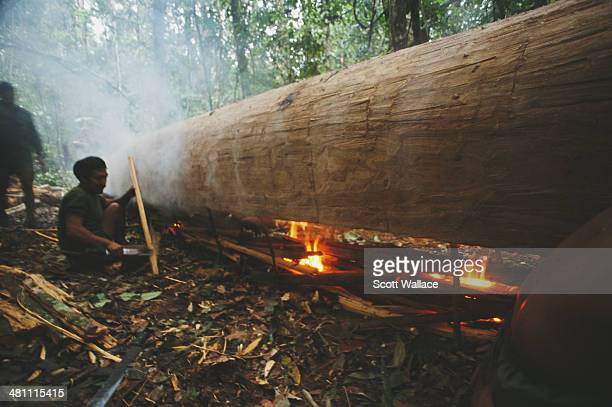 Men burning out a dugout canoe during an expedition led by Brazilian explorer social activist and ethnographer Sydney Possuelo in the Amazon...