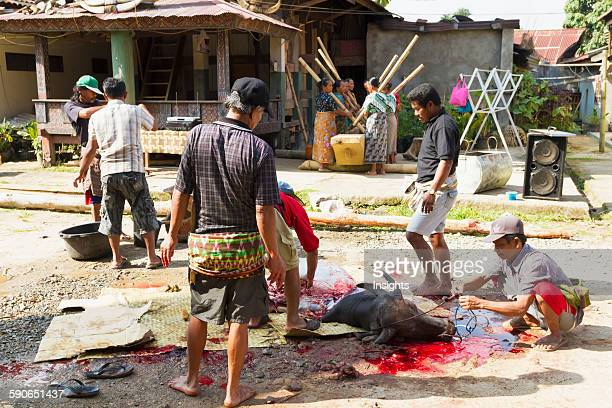 Men butchering a water buffalo at a rante the ceremonial site for a Torajan funeral ceremony in Rantepao Toraja Land South Sulawesi Indonesia