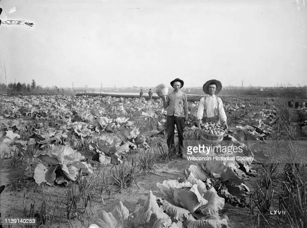 Men displaying produce a large cabbage and a bushel of potatoes while standing in the gardens of the Thayer farm Phillips Wisconsin September 4 1895...