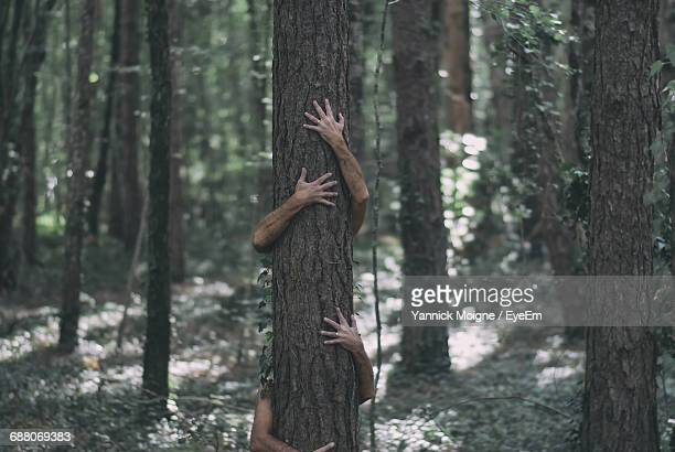 men embracing tree trunk in forest - tree hugging stock pictures, royalty-free photos & images