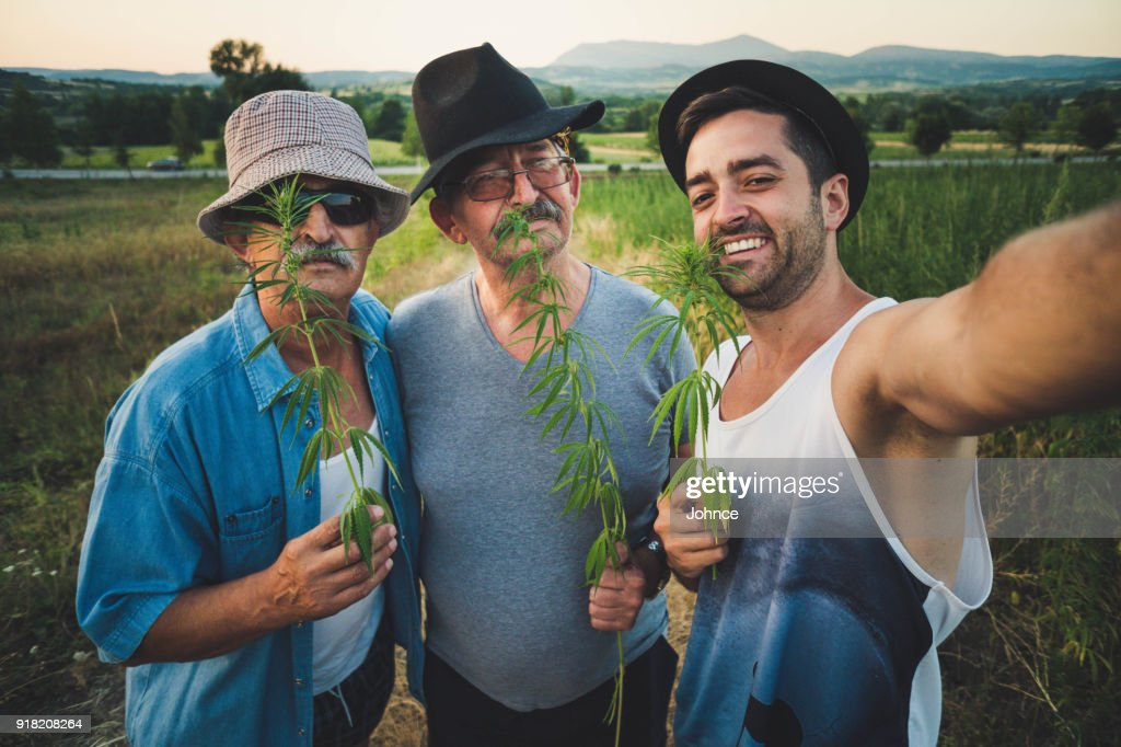Men enjoying in marijuana field : Stock Photo