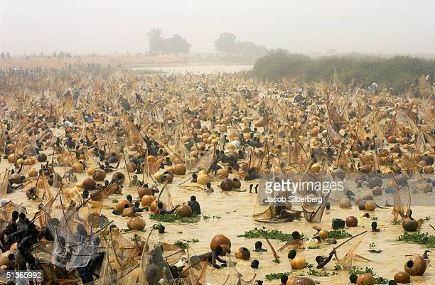 30000 men fish with traditional nets during the Argungu Fishing Festival in Argungu Nigeria on March 19 2004 The Argungu Fishing Festival was first...