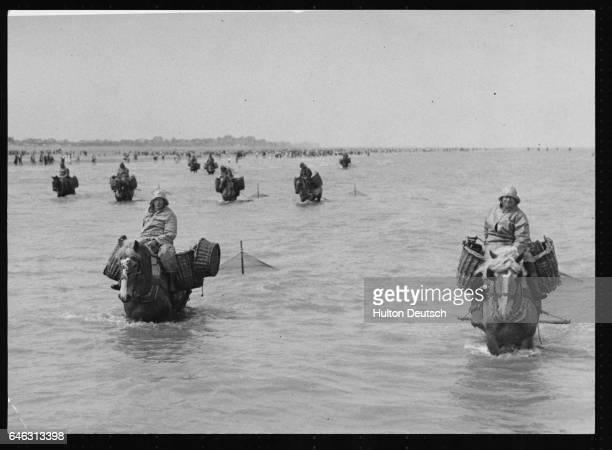 Men from the Belgian village of Oostduikerke shrimp fishing on horseback at the annual competition