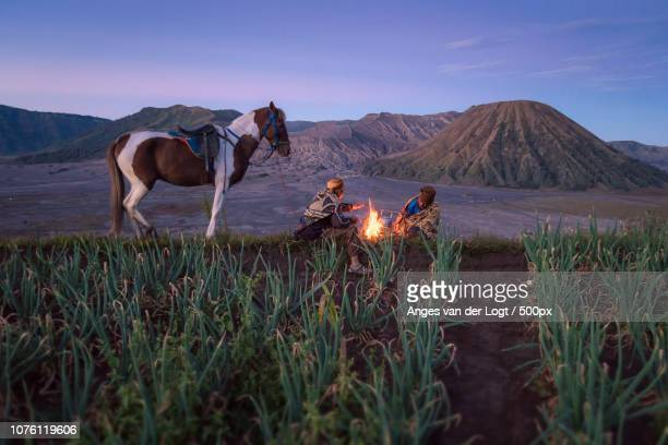 men from the tengger tribe in an onion field - tengger stock pictures, royalty-free photos & images