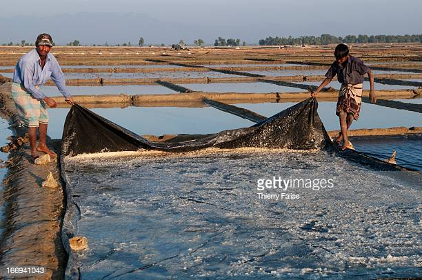 COX'S BAZAR BANGLADESH Men gather raw salt on a tarpauline after the sun has evaporated the water in a paddy near the Bangladesh southern coastline...