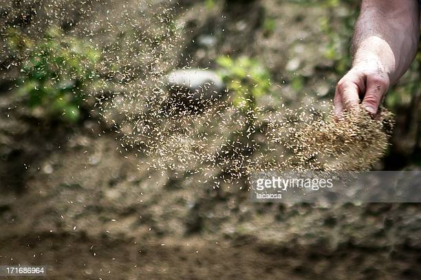 Men hand strewing grass seeds