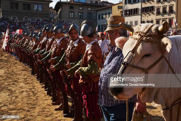 The cow as prize for the winning arrive on the Calcio Storico Fiorentino 2018 semifinal match at Piazza Santa Croce on June 9 2018 in Florence Italy...