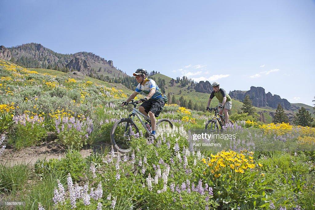 Men mt biking : Stockfoto