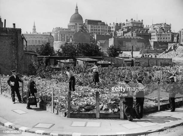 Men of the local Redcross Street National Fire Service station tend to their vegetable allotment garden as part of the Dig for Victory war effort...