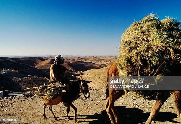 Men on donkeys Tamezret Tunisia