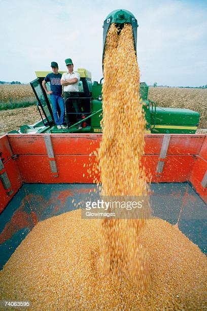 Men oversee corn moving from combine to wagon, Ohio