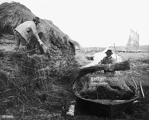 Men piling up bundles of reed into ricks for use as thatch. The reeds are being transported in a wide flat bottomed boat. Original Artwork:...