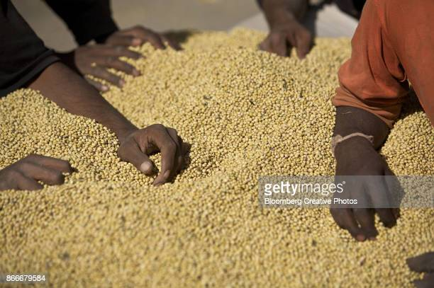 Men rest on a pile of soy beans in Dewas, India