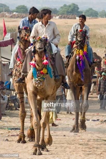 men riding decorated camels - only men stockfoto's en -beelden