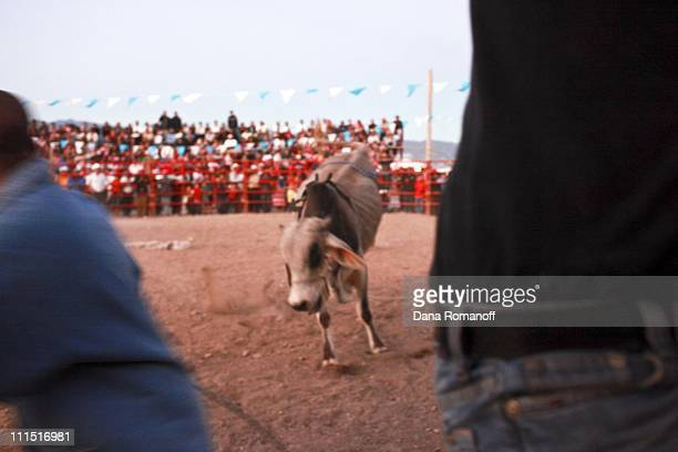 Men run from a bull during the annual rodeo on November 19 2009 in the Zapotec town of San Marcos Tlapazola in the Central Valley of Oaxaca Every...