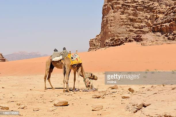 men siting on camel in desert - only men stockfoto's en -beelden