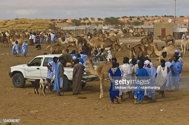 Men trading camels at the camel market of Nouakchott, Mauritania, Africa