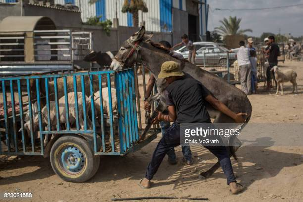 Men try to load a donkey onto a small cart at an animal market in Al Bureji on July 20 2017 in Gaza City Gaza For the past ten years Gaza residents...