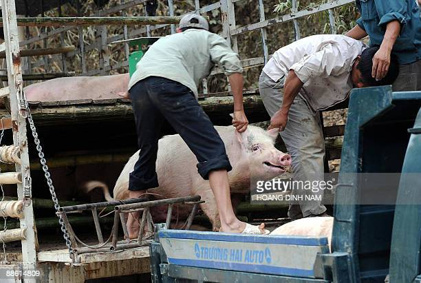 Men unload pigs from a truck in the northwestern town of Son La on May 5 2009 Vietnam which has the world's secondhighest death toll from bird flu is...