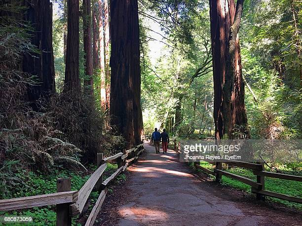 men walking on pathway amidst trees at muir woods national monument - muir woods stock photos and pictures