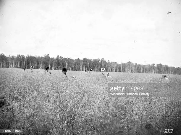 Men waving their hats standing in a field of shoulderhigh oats on the farm of Edward Dascam one and onehalf miles northeast of Antigo Langlade County...