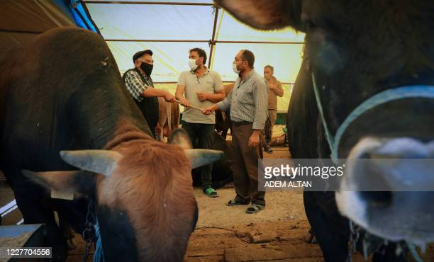 Men wearing protective face masks as a precaution against coronavirus pandemic stand next to cattle eating at a livestock market ahead of Eid alAdha...