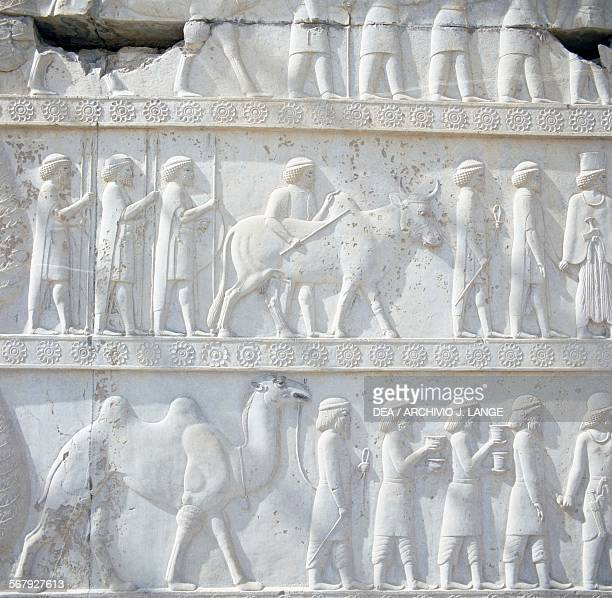 Men with camel and bull basrelief on the steps of the Apadana palace Persepolis Iran Achaemenid civilisation 6th5th century BC