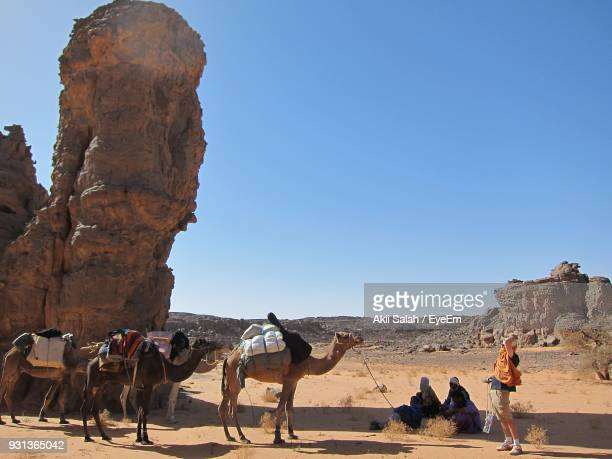 Men With Camels At Desert Against Clear Blue Sky