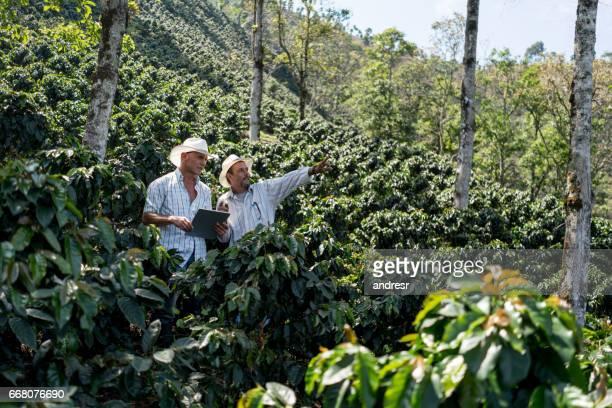 Hommes travaillant dans une ferme, récolte de café