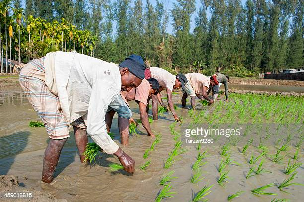 Men working in paddy field