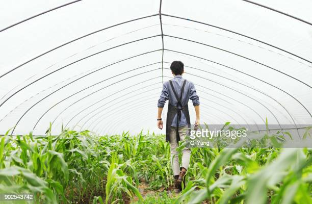 Men working in the greenhouse, China