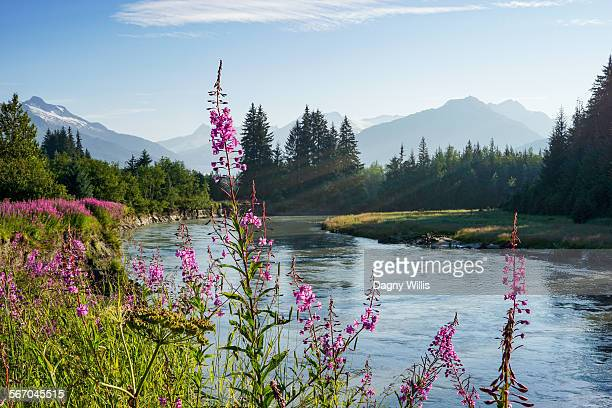Mendenhall river in Alaska